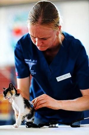 Vacunas fundamentales para gatos y perros